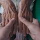 پرستاری از سالمند در نوبنیاد