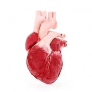سکته قلبی چیست ؟ علائم سکته قلبی + عوارض سکته قلبی